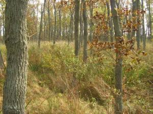 Photo 15 - Deciduous Swamp Green ash