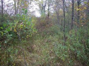 Photo 8 - Cultural Woodland Green ash